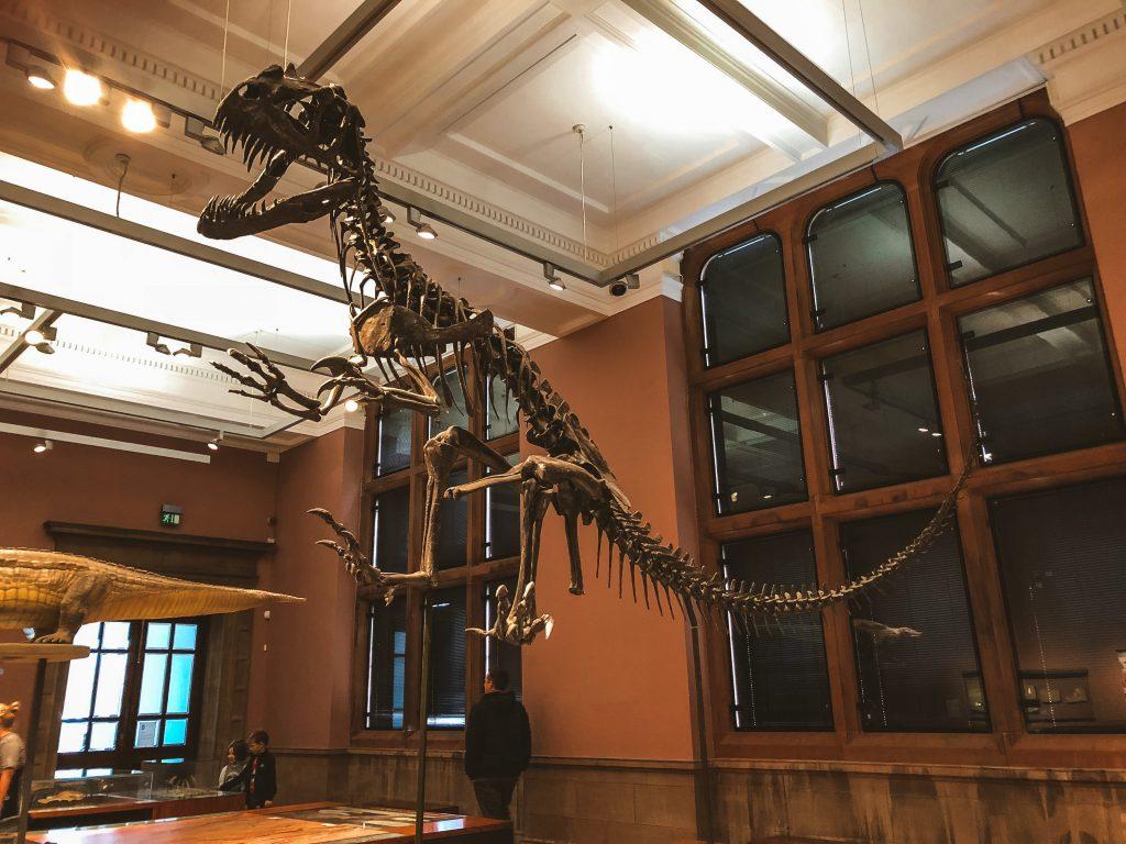 Museo Kelvingrove